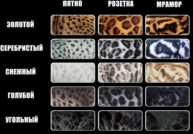 Название цветов кошек с картинками