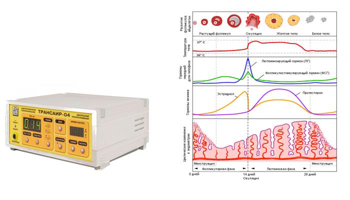 Нормализация гормонального фона у женщин методом транскраниальной электростимуляцией мозга