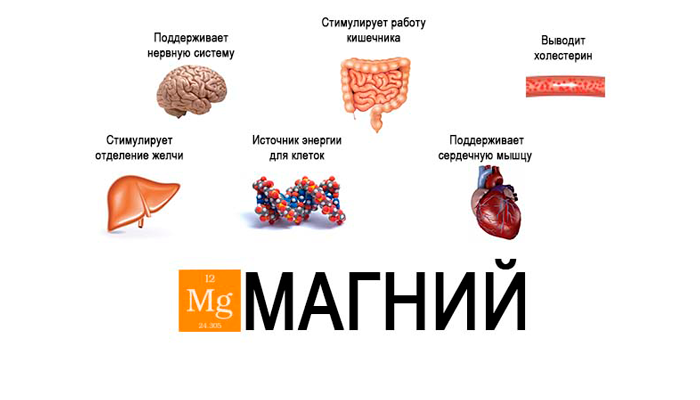 Функции магния в организме человека