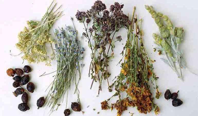 Полезные травы при простатите и аденоме простаты