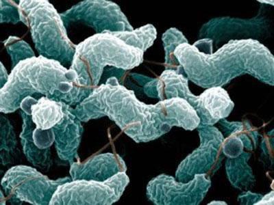 Кандидоз кишечника под микроскопом