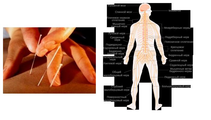 Нормализация нервной системы при помощи рефлексотерапии