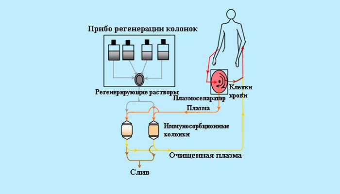 Схема процедуры иммуносорбции