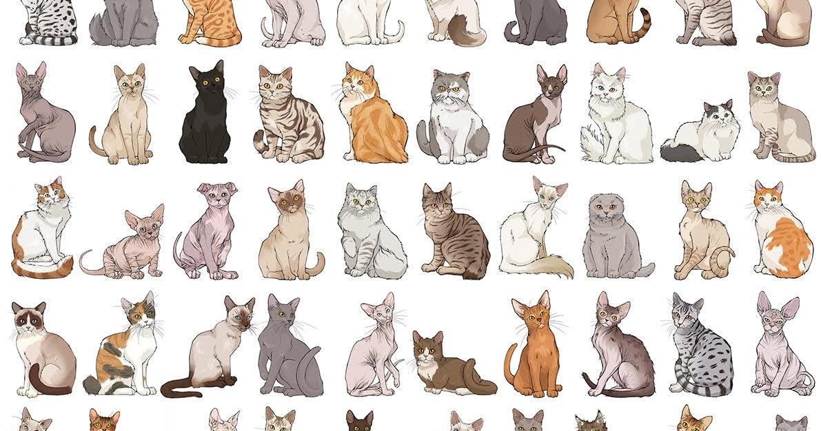 окрас кошек с фотографиями и названиями высок риск