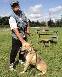 Русская гончая: какой характер у собаки? Уход и правила содержания