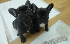 два милых щенка