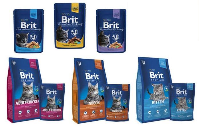 Мнение экспертных фелинологов чем кормить Британскую кошку и котят в домашних условиях?