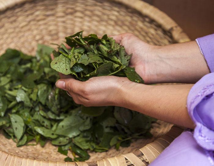 Для лечения алкоголзма используют отвар из листьев и корней щавеля