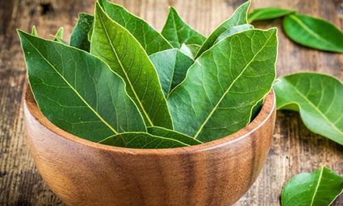 Лечение остеохондроза лавровым листом