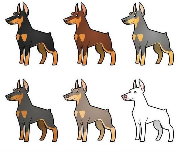Все стандартные и уникальные окрасы Добермана: подробное описание раскрасок