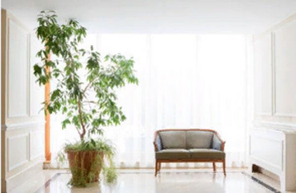 Уютная комната. В ней стоит диван и высокое растение в горшке