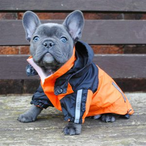 Модный приговор для собак одежда и намордник на Французских бульдогов