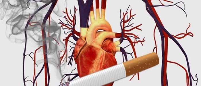 Курение непосредственно негативно влияет на сердечно-сосудистую систему