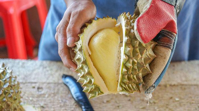 Несмотря на очень неприятный запах Дуриана, плод внутри него не является настолько отвратительным