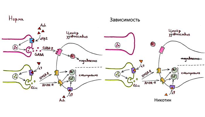 Схема формирования никотиновой зависимости