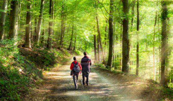 Пара гуляет по лесу