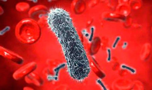 Анализ крови на наличие бактерий