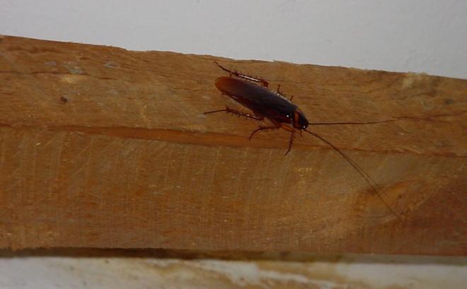 таракан ползет