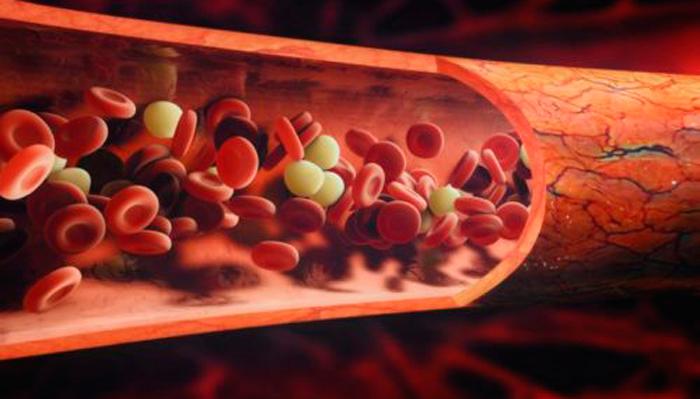 Сгущение крови через время после приема алкоголя
