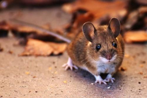 Почему мыши грызут пенопласт