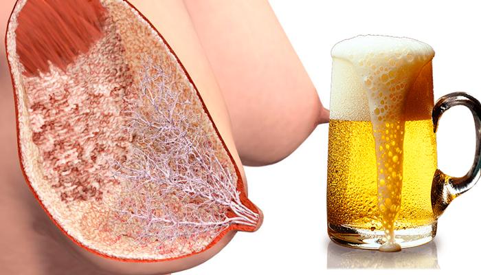 Влияние пива на лактацию