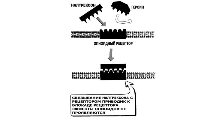 Действие Налтрексона на рецепторы