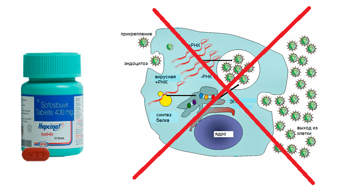 Препятствие препаратом Софосбувир размножению вируса гепатита С