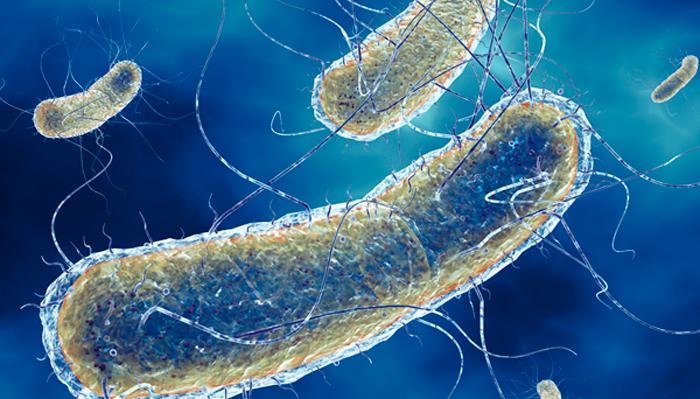 Развитие пиелонефрита из-за инфекции кишечной палочки