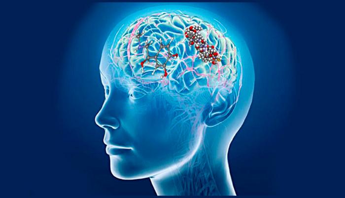 Выработка эндорфинов и адреналина в мозгу у человека в процессе курения