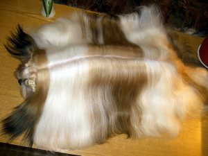 Длинношерстная красавица ши тцу: характеристика породы