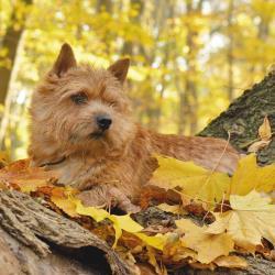 Трудности воспитания собаки