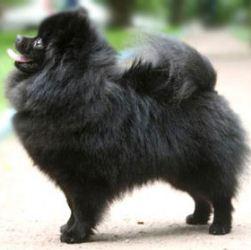 Содержание и уход за псом