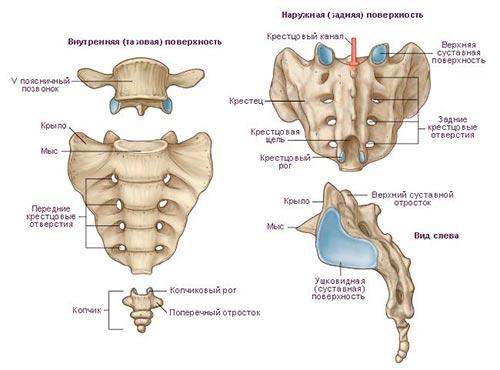 Боль в копчике или в области копчика – ее причины и лечение