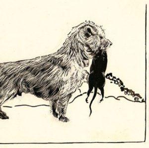 Комнатная собачка с красивой шевелюрой Йоркширский терьер: история породы и характер